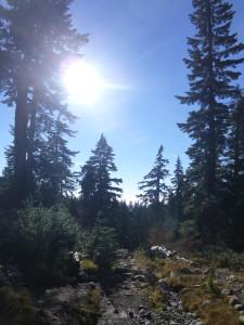 Mount Seymour, hike, trees, sun
