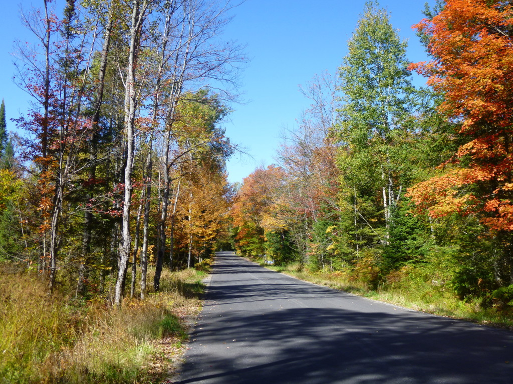 Ontario, country road, autumn, fall, leaves, forest