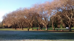 stanley park vancouver winter