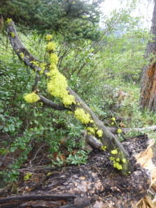 lichen, hike, banff