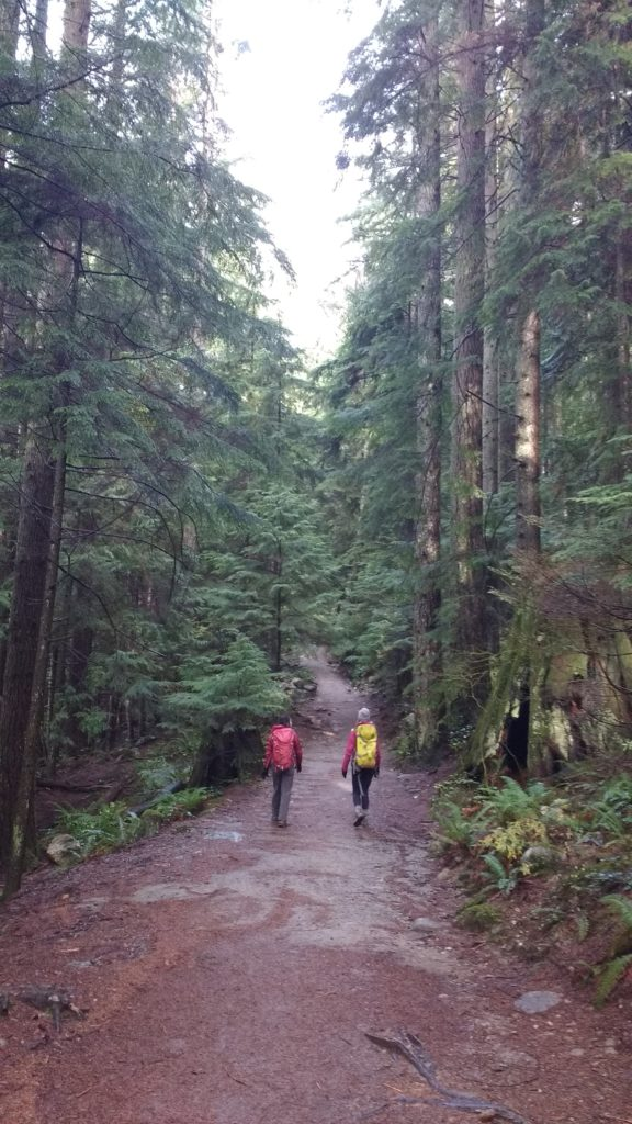 hikers, women, forest, trees