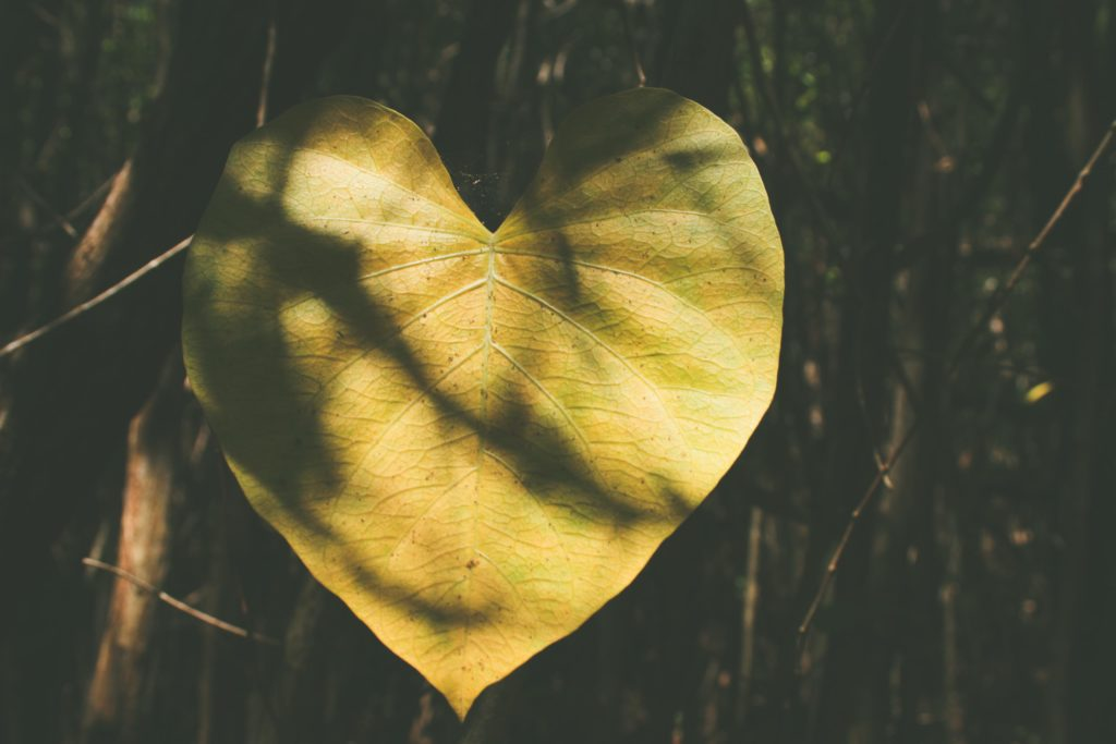 Leaf, heart, tree, love
