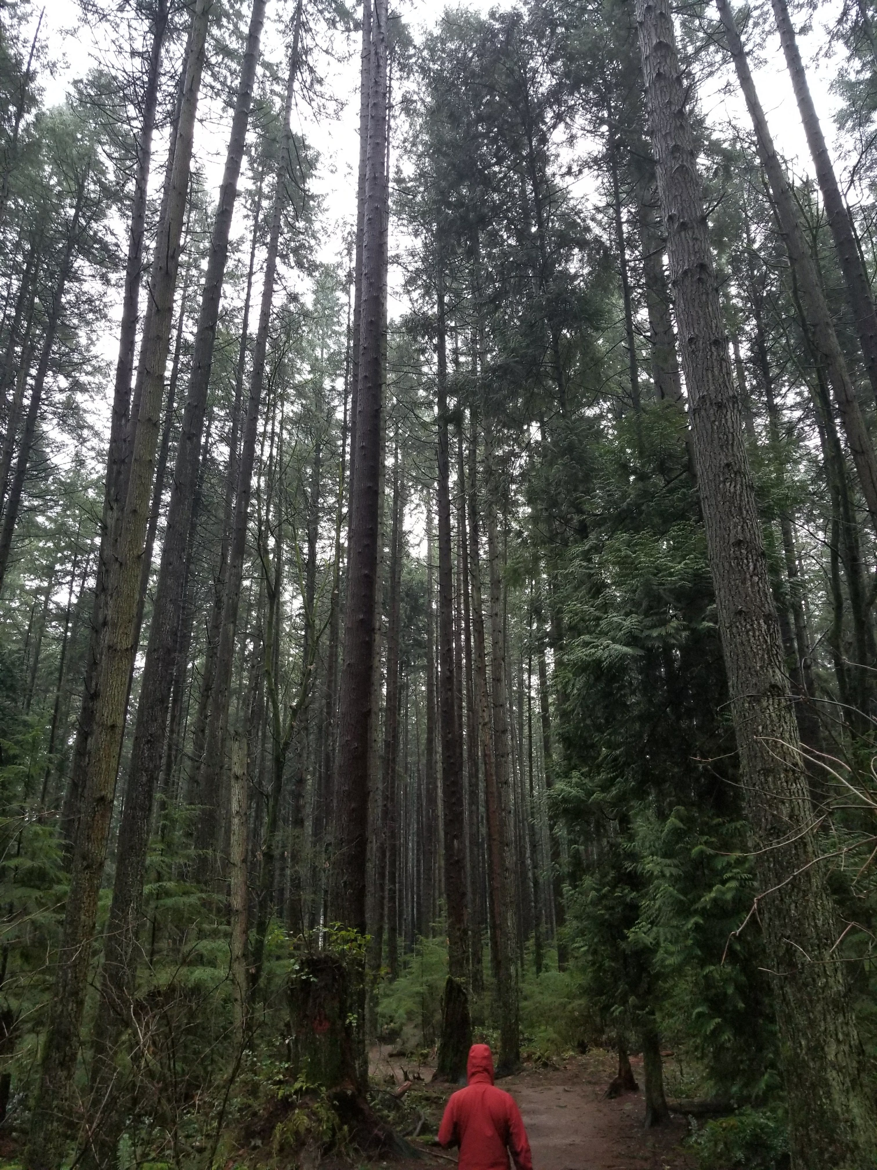 trees, forest, woods, pacific spirit park