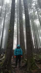 hiker, trees, hiking, rain