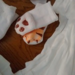 baby socks tiger