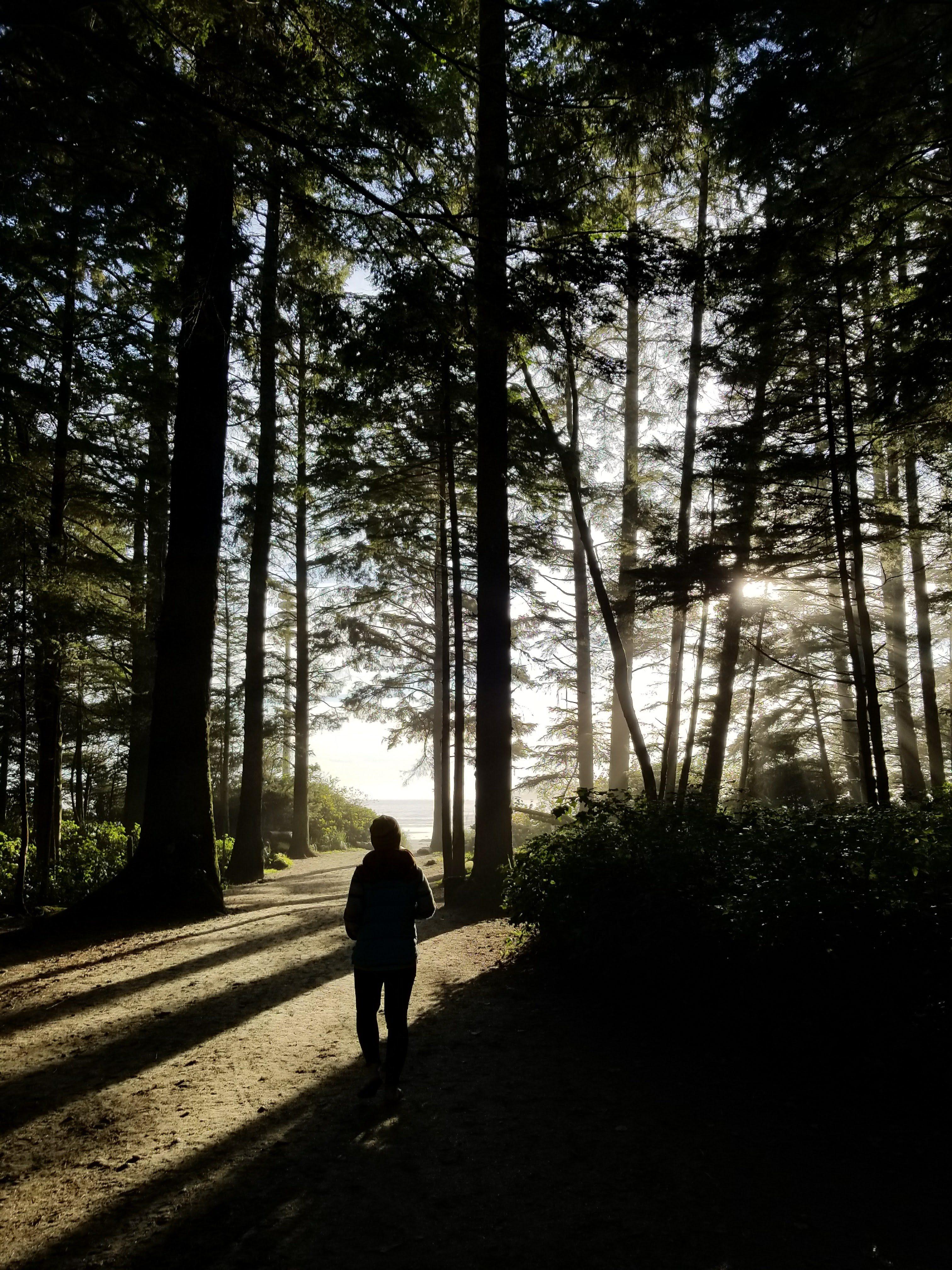 forest, beach, woman, trees, shadows