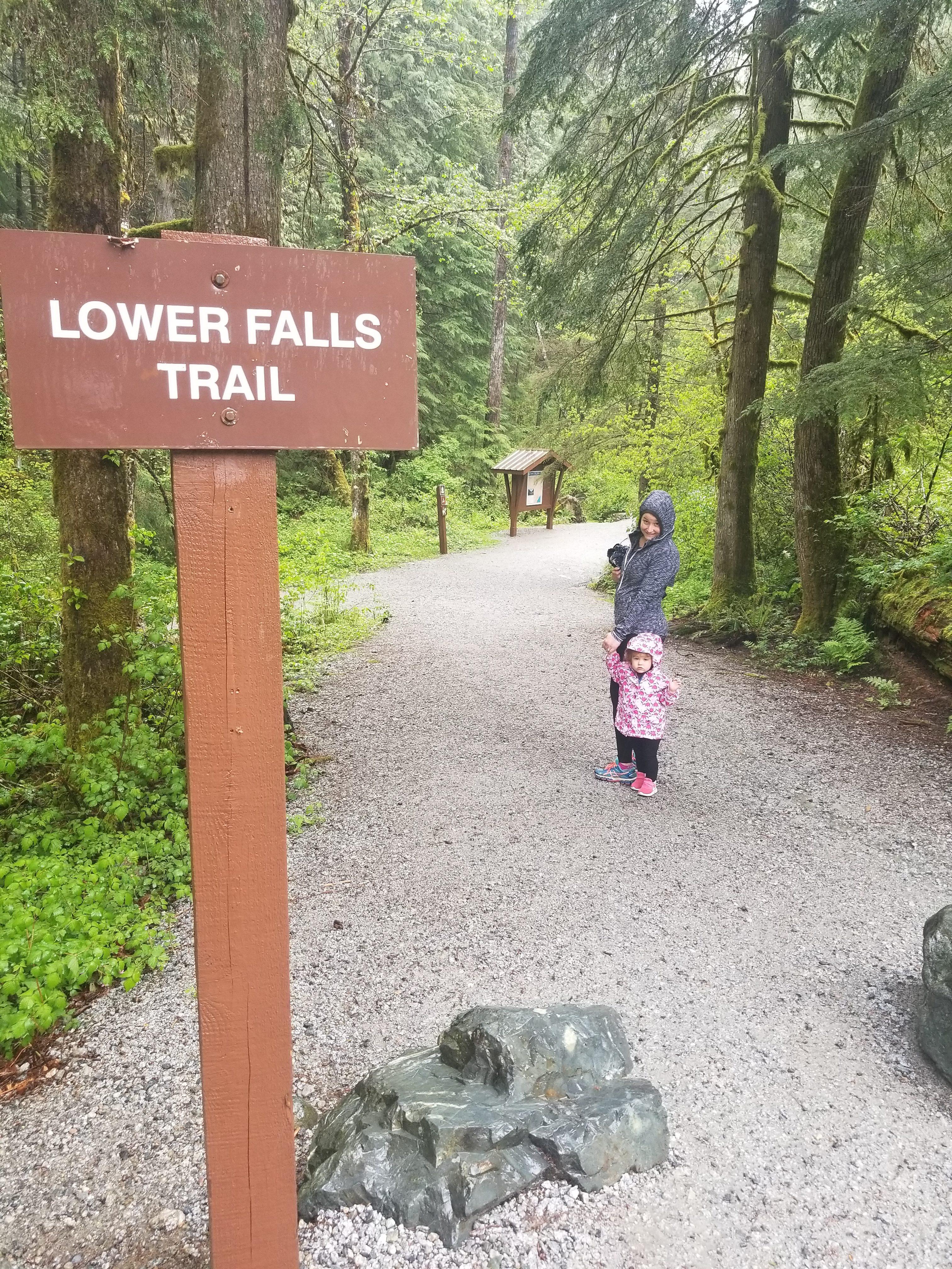 lower falls trail, forest, hiking, golden ears, maple ridge